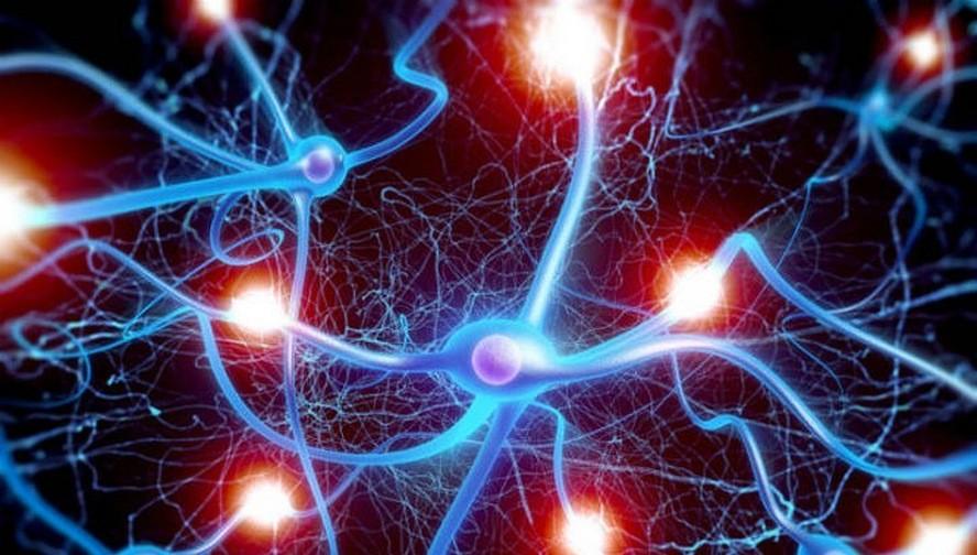 Ученые пояснили, как мозг удерживает полезные воспоминания