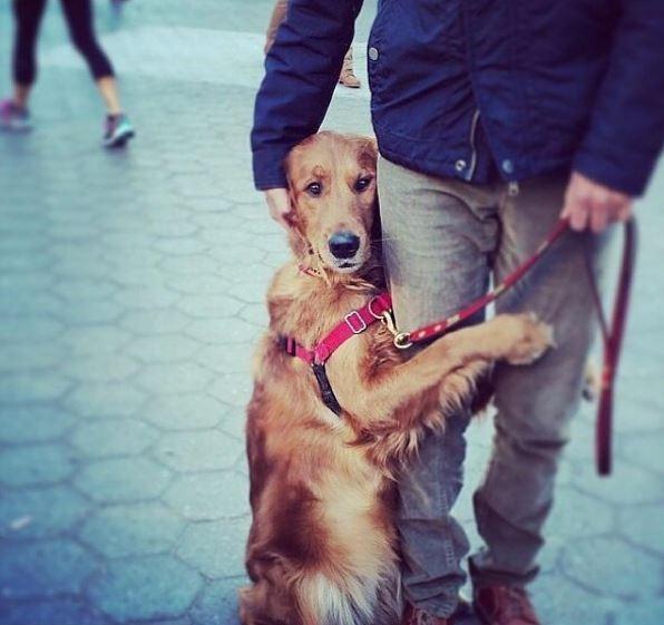 Любящая обниматься собака стала звездой Instagram