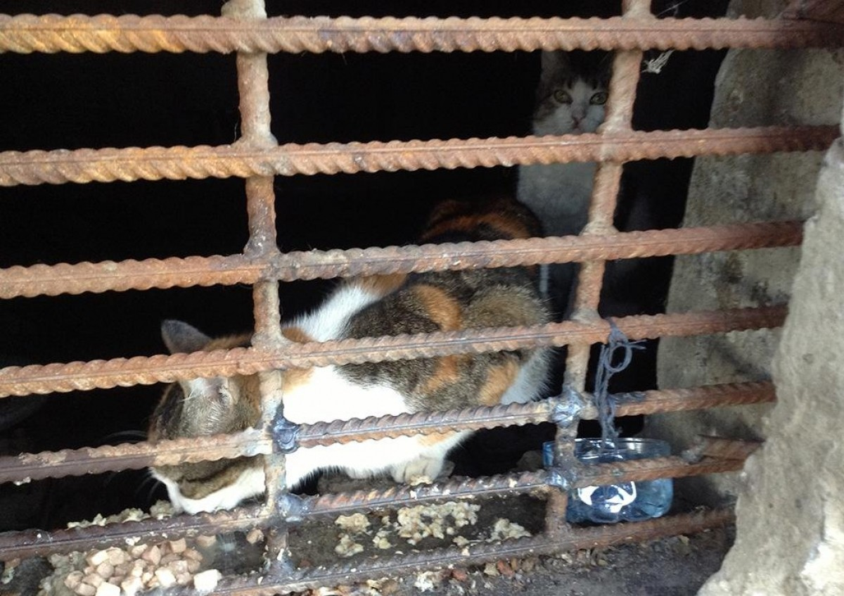Порядка 50 кошек оказались замурованными вподвалах в столице России