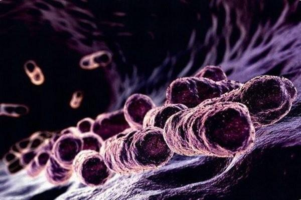 Профессионалы бьют тревогу из-за устойчивости супербактерий кантибиотикам