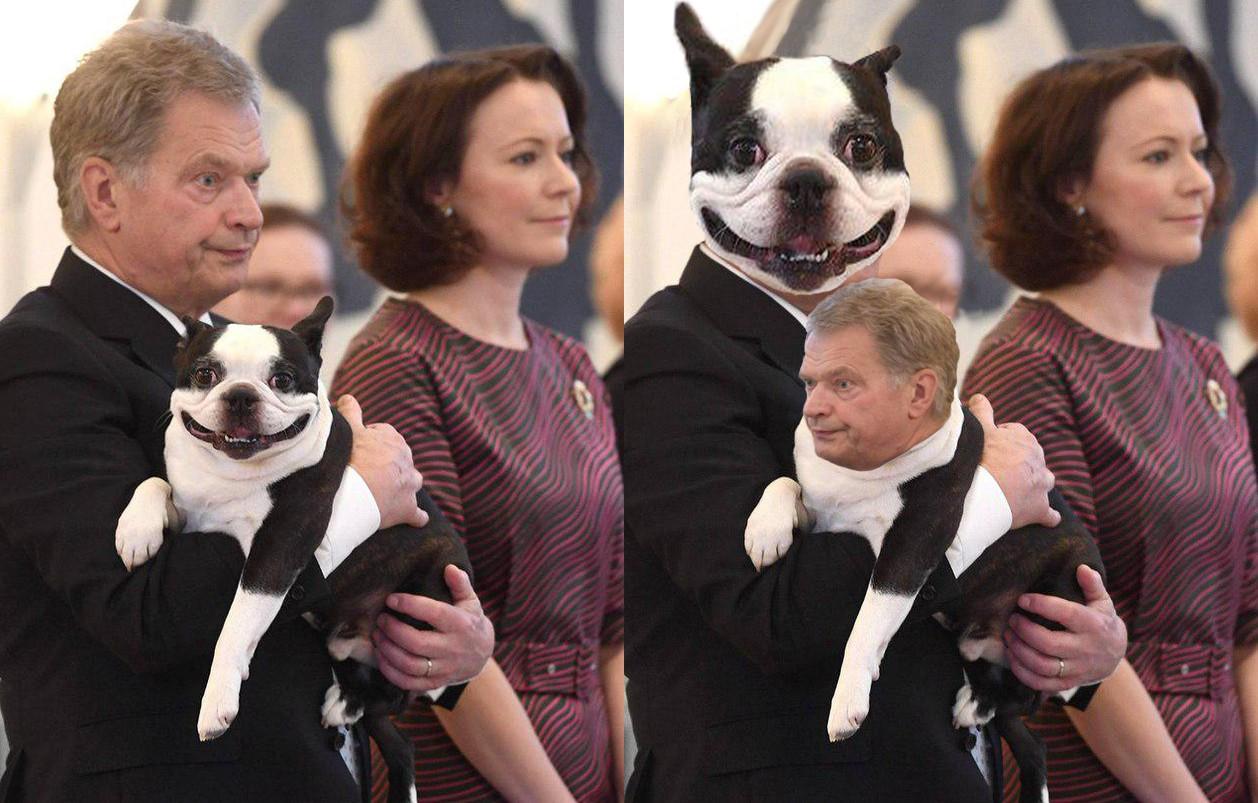Пес президента Финляндии стал героем социальных сетей