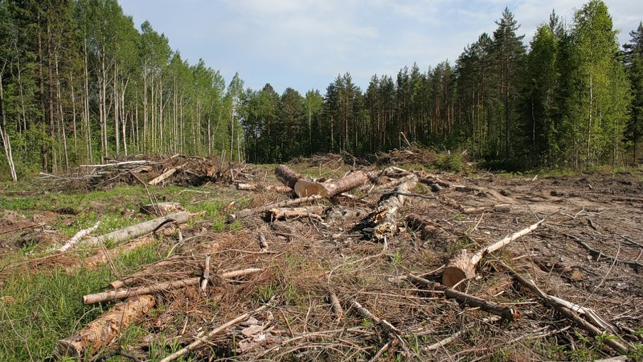 Экологи США: площадь вырубки лесов сельской территории разрушительно влияет наэкосистему