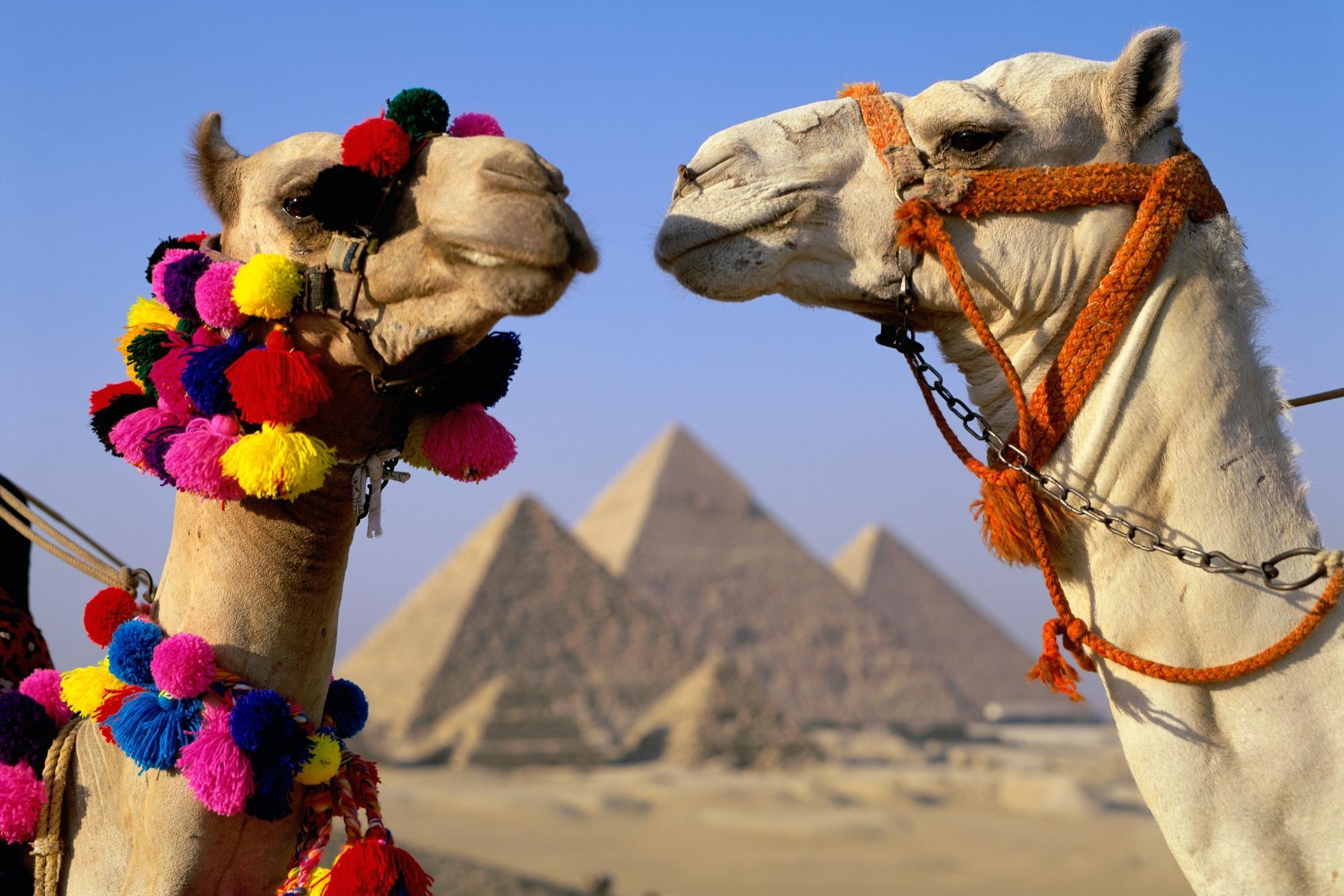 Египет вдва слишним раза увеличивает стоимость въездных виз