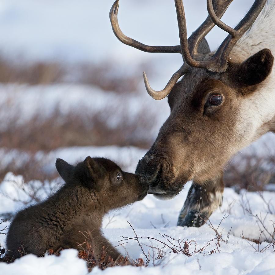 Природа Арктики находится вхаосе из-за глобального потепления— Ученые