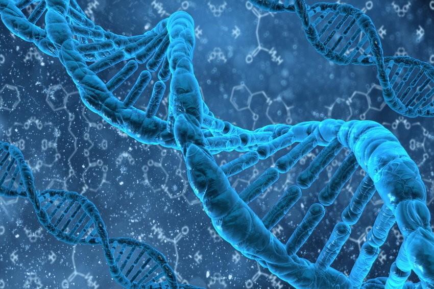 Ученые научились управлять полом ребенка при помощи гена DSX