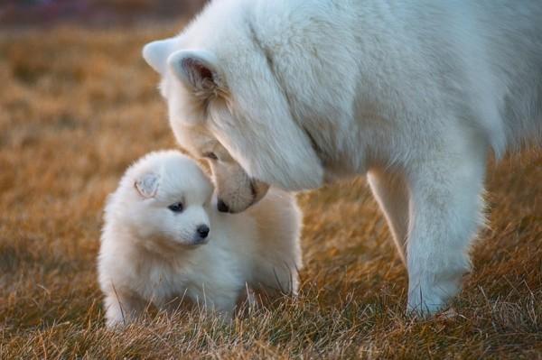 Ученые озвучили верный способ сопоставления возраста собаки и человека