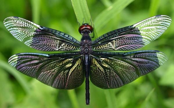 Ученые США запустили проект по созданию насекомых-киборгов