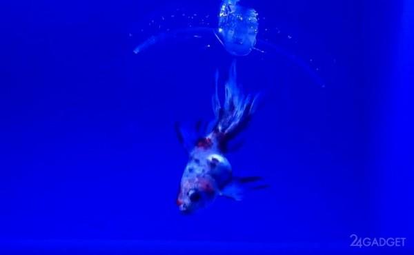Ученые МИТ разработали робота-рыболова