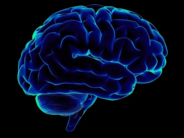 Ученые узнали, как улучшить способность мозга к обучению