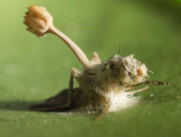 Учёные предупреждают людей об опасных паразитах