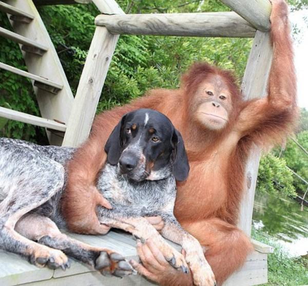 Ученые: Собаки и обезьяны тянутся к добрым людям