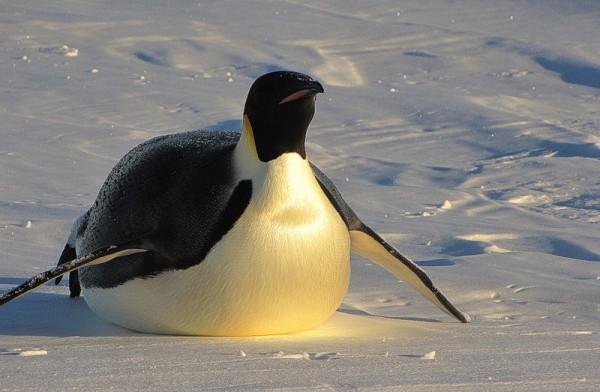 Ученые нашли останки пингвина, живущего на Земле в эпоху динозавров