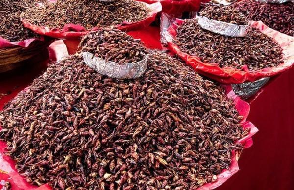 Учёные подсчитали, что насекомые смогут прокормить человечество