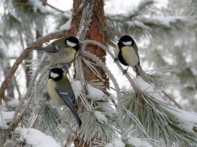 Учёные: Человеку для улучшения психологического состояния нужно наблюдать за птицами
