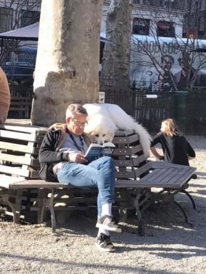 Читающая собака стала звездой интернета