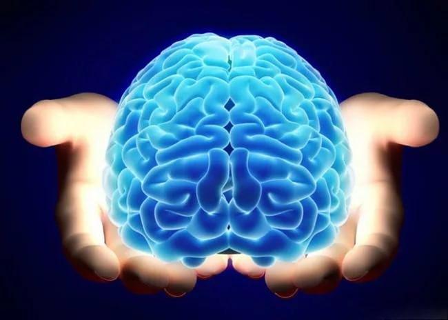 У неразумных людей может быть большой мозг— Ученые