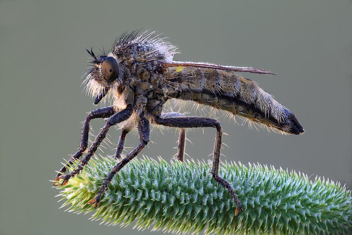 ВМГУ завезли хищных мух