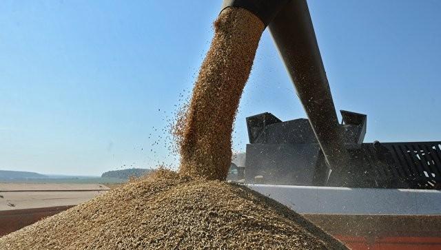 Российская Федерация рассматривает возможность экспорта части госзапасов зерна
