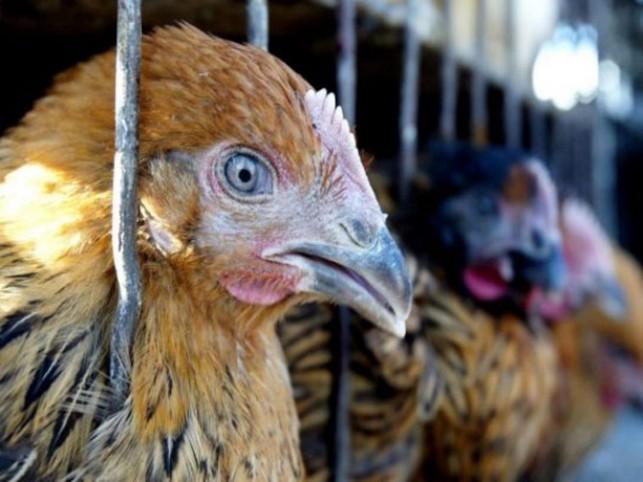 Заболеваний птичьим гриппом среди населенияМО нет