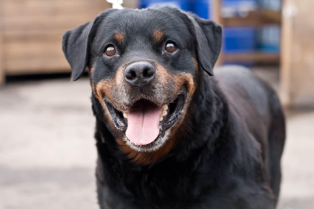 ВВеликобритании собачка спасла жизнь владельцу, открыв дверь докторам