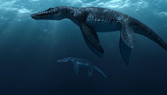 ВКолумбии обнаружили останки динозавра, который жил 127 млн лет назад
