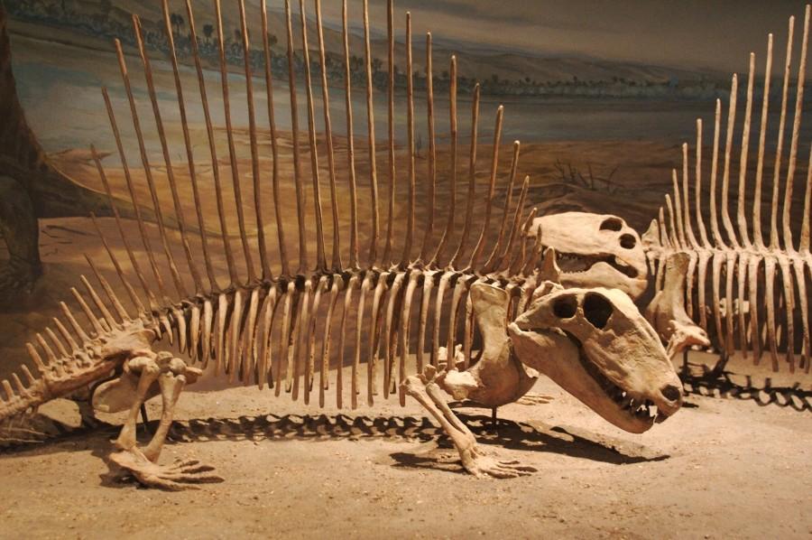 Китайские археологи отыскали следы доисторических ящеров