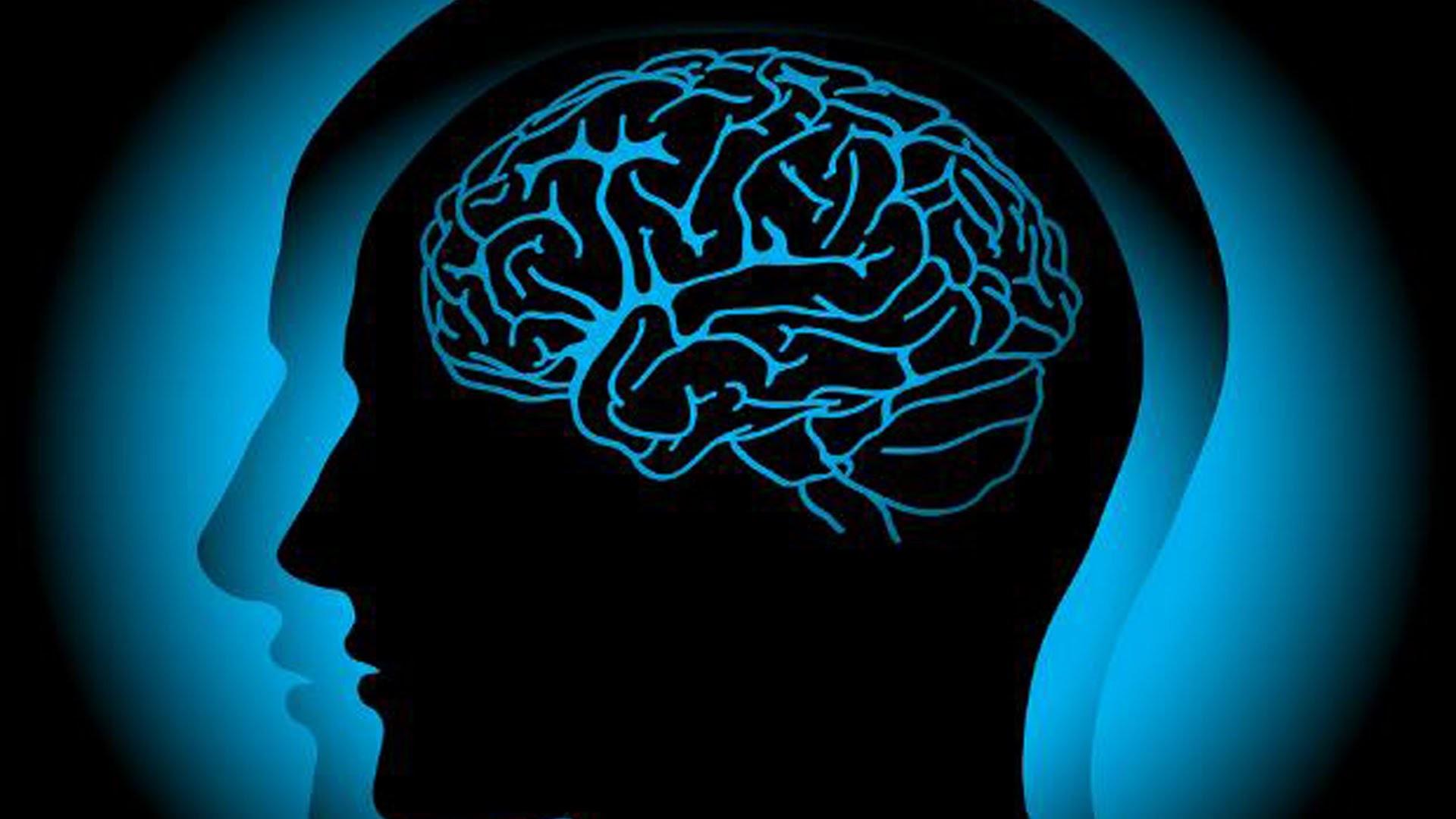 Раскрыты настоящие причины появления огромного мозга учеловека— Ученые