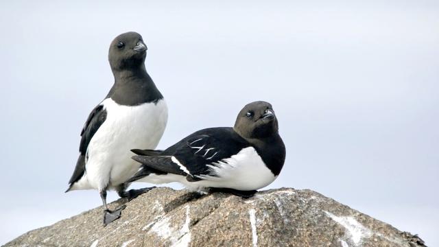 Встрессовых ситуациях птицы заботятся осебе, ноне опотомстве