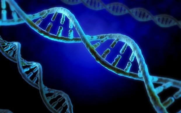 Генная терапия впервый раз спасла мышь отразвития слепоты— Ученые