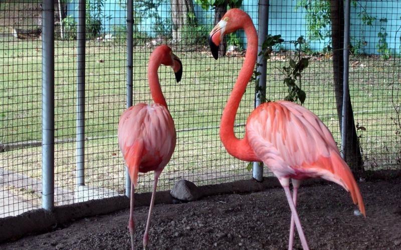 Дети досмерти закидали камнями фламинго взоопарке