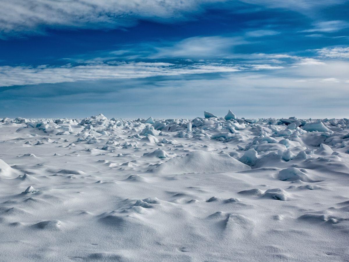 Ямальские ученые вснегах Арктики проводят ботанические исследования
