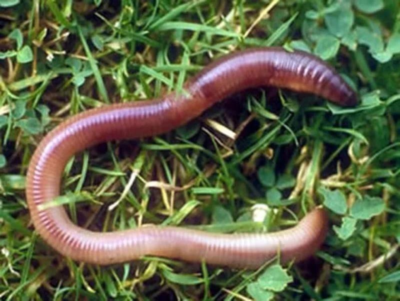 Омский ученый одержал победу грант насоздание медпрепарата изпомета червей