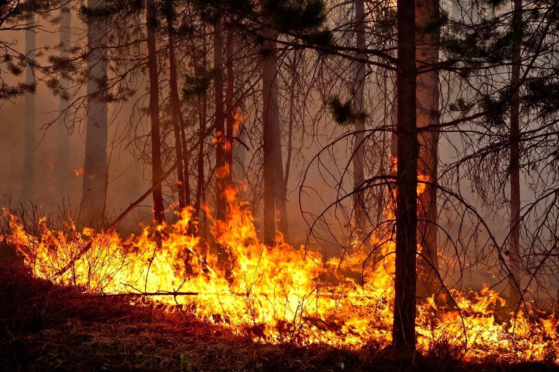 Засутки на далеком  Востоке сгорели неменее  тысячи гектаров леса