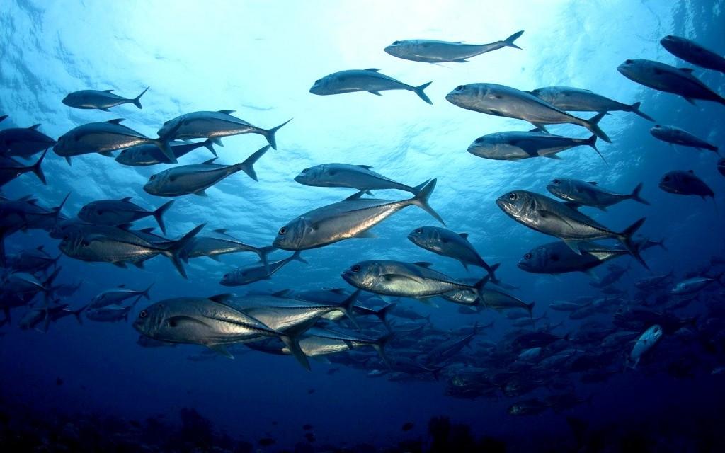 ВМировом океане исчезнет вся рыба