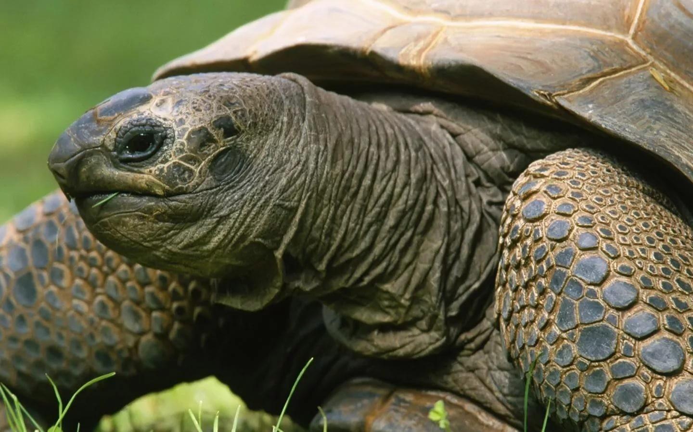 Проглотившая неменее  900 монет черепаха скончалась  вБангкоке