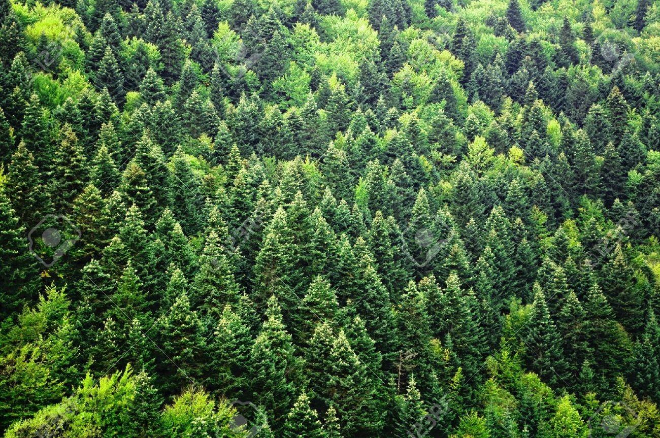 WWF: 5 древнейших лесов РФ находятся награни исчезновения