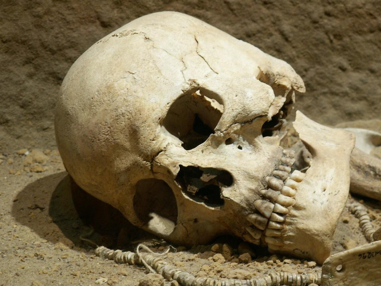 Испанские археологи обнаружили пещеру, вкоторой жили древнейшие каннибалы