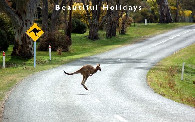 ВАвстралии кенгуру атаковал едущее заним авто
