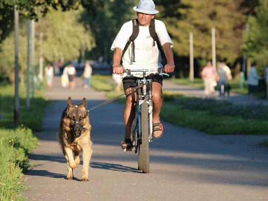 Москвичи обсудят правила содержания бойцовых собак в«Активном гражданине»