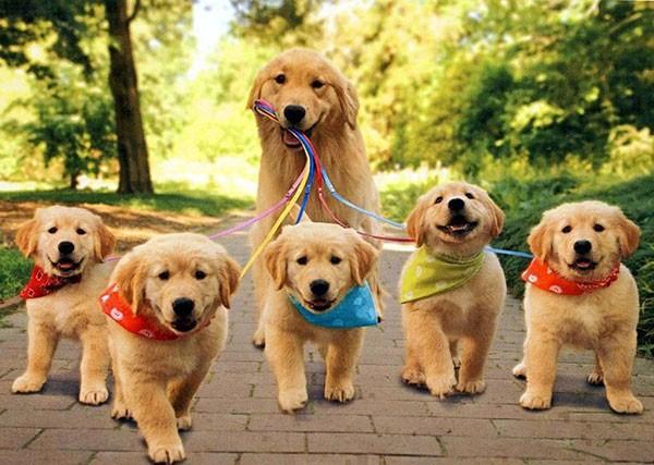 Ученые: собаки всостоянии испытывать чувство вины