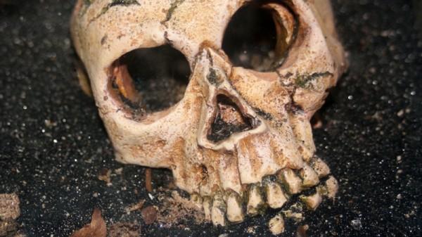 В Китае археологами США найден череп неизвестного ранее вида человека