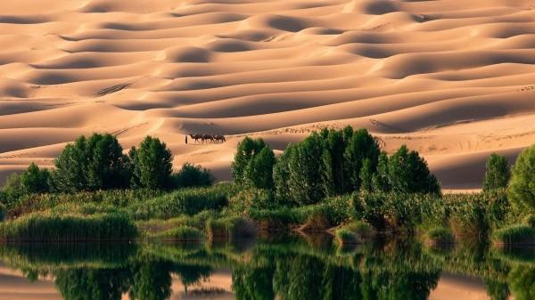 Ученые: В прошлом Сахара была оазисом