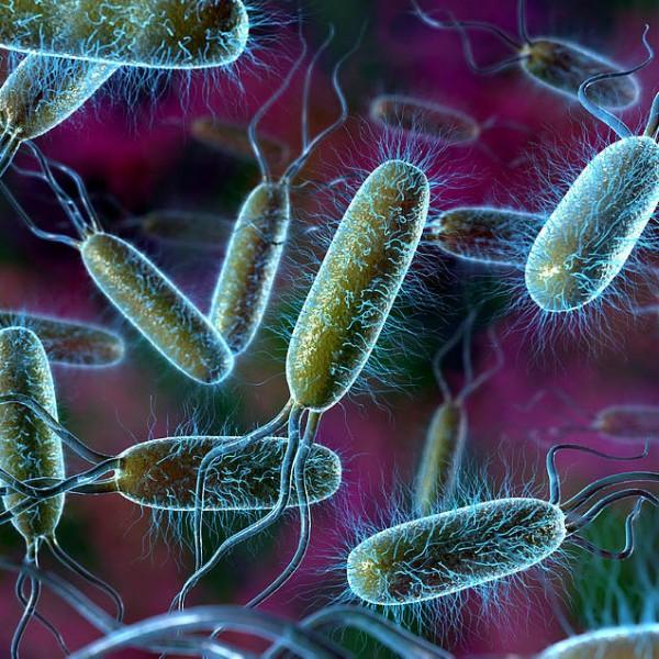Ученые установили, что кишечные бактерии животных провоцируют болезни у людей
