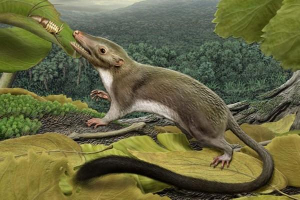 Ученые: Развитие челюсти поспособствовало выживанию млекопитающих