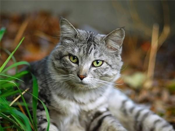 Госдума РФ предложила ввести официальное понятие «жестокое обращение с животными»