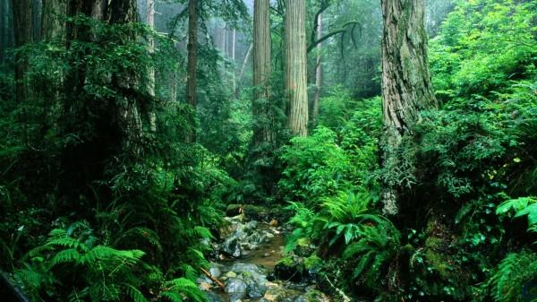 Деревья являются частью регулирования климата на планете - ученые