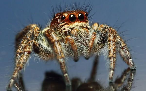 Ученые: Пауки способны съесть всех людей за 1 год