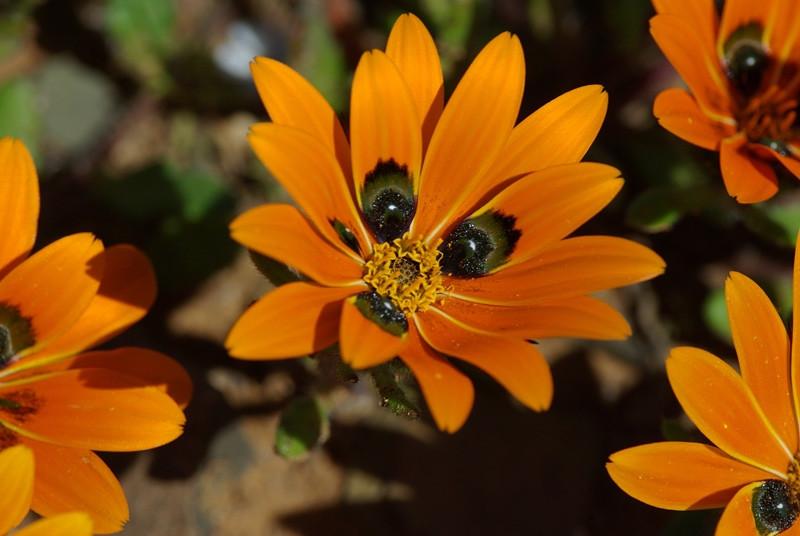 Ученые нашли у растений слух