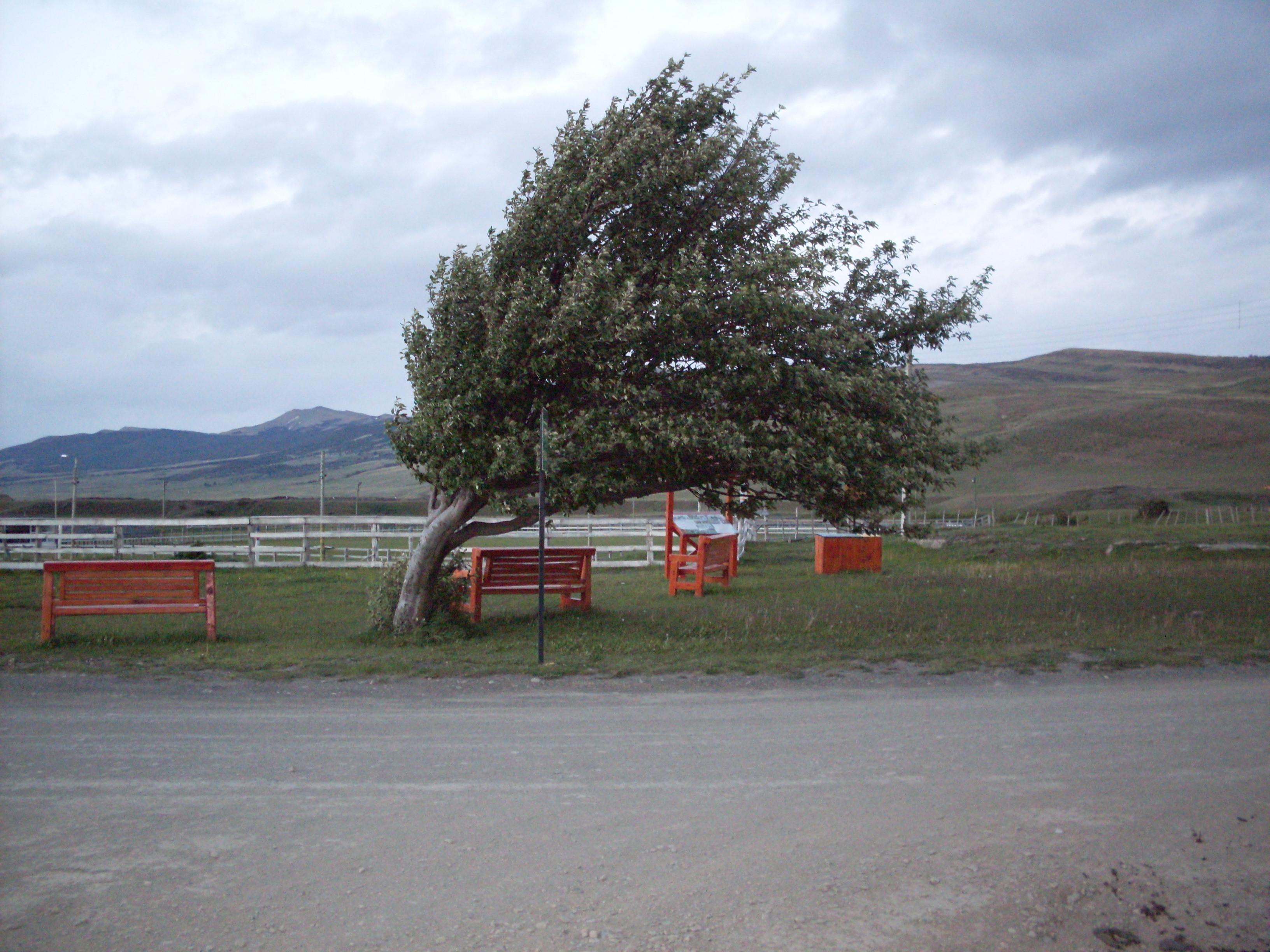 Погода вБашкирии начетверг: сильный ветер ипасмурное небо