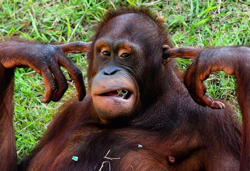 Ученые составили ТОП-5 самых умных животных наЗемле